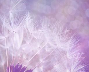Gentle Healer Reiki Attunement