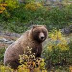 Fae Spirit of the Bear Lightwork