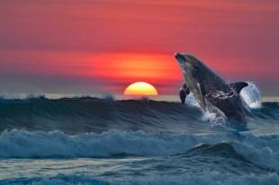 Dolphin Rainbow Chakra Healing System