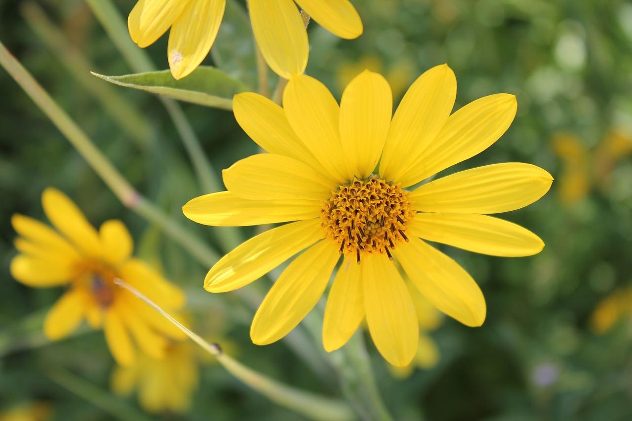 Flower Essences Meditation Program Attunements