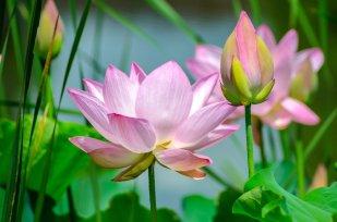 Prosperity Transmutation Energy