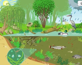"""Image result for earth ecosystem"""""""