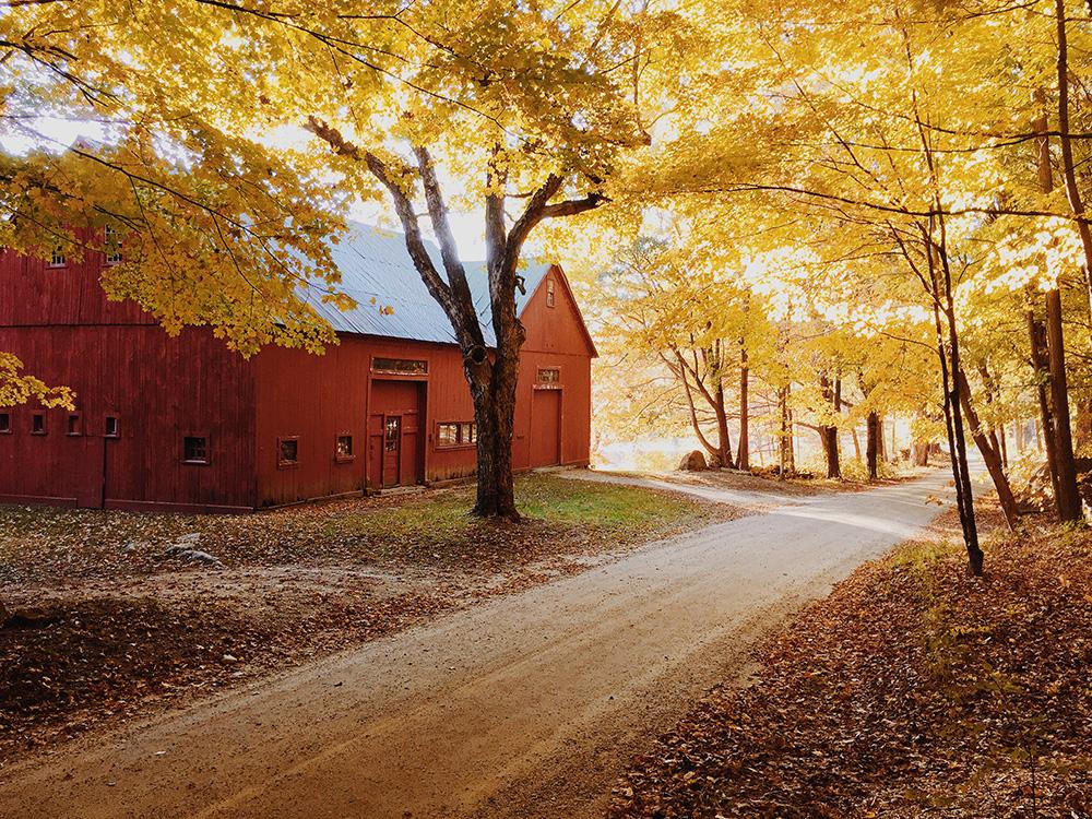 Fall White Pumpkins Wallpaper New England Barns Photos