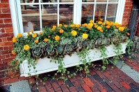 Window Boxes | Tips and Advice - New England Today