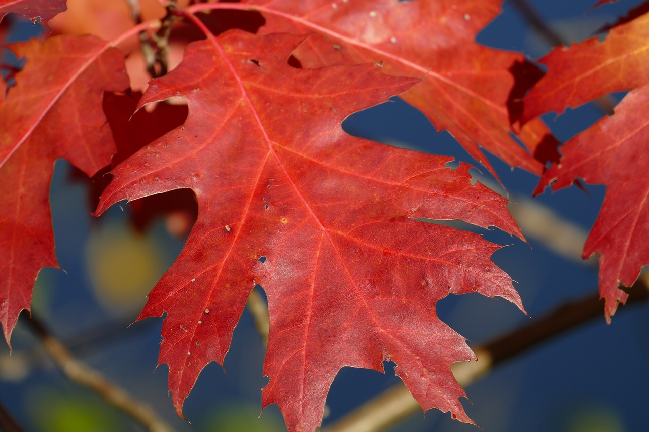 The Meaning Of Fall Foliage