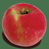 Lady Williams Apple New England Apples