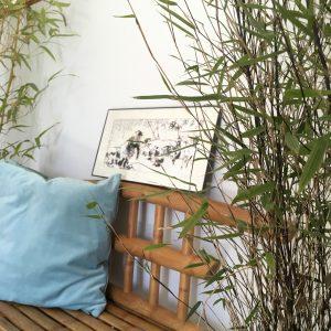 bamboo indoors