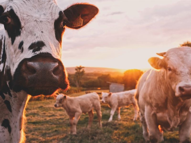 The Farm Safety Net and the 2018 Farm Bill