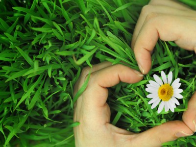 Two hands making heart shape around a daisy in grass. This signifies emotional connection for couples and improved communication for couples after attending a private marriage retreat in New Engalnd.