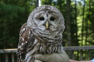 Owl-300x200