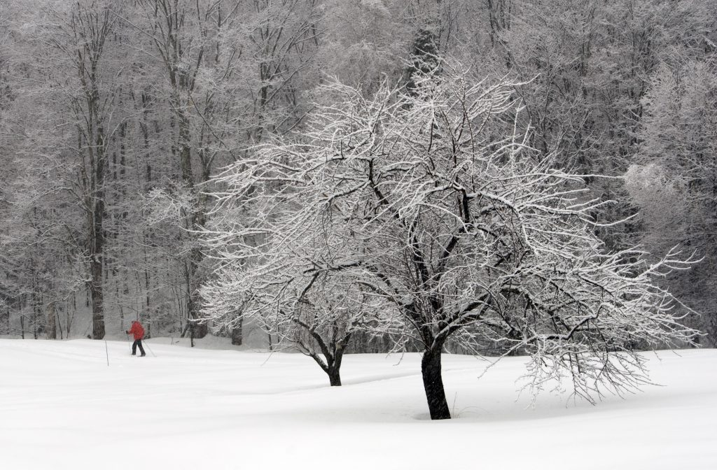 Wallpaper Falling Snow The Most Beautiful Quotes About Snow And Winter New
