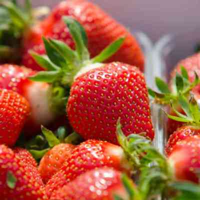 6 Best Tips for Strawberry Picking
