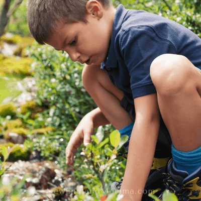 Letterboxing – An Outdoor Treasure Hunt for Kids of All Ages