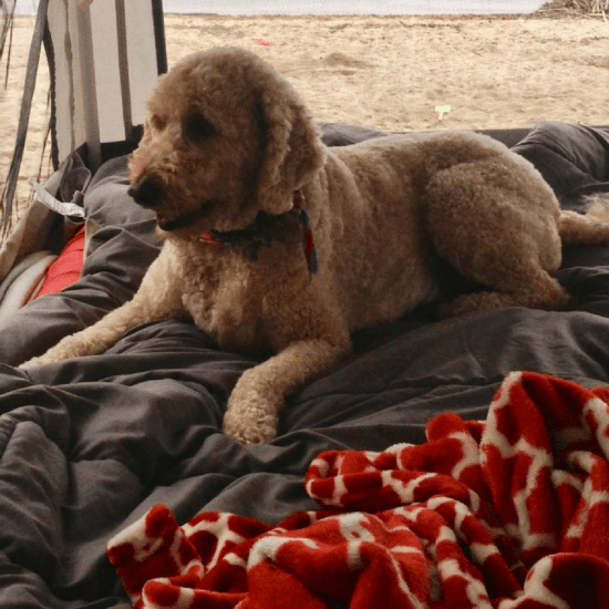 Camping is a great outdoor activity the family can enjoy, even the dog! Here is exactly what you need to know to take your dog camping for the first time.