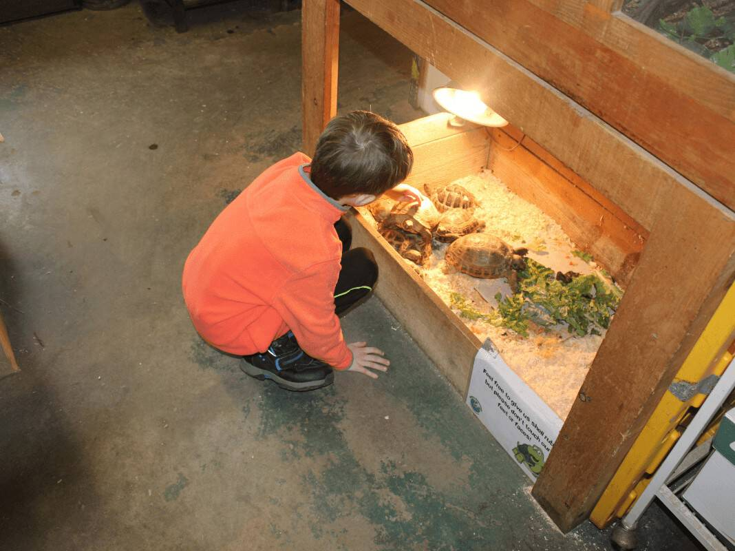 little boy patting and touching a turtle's shell at Animal Adventure