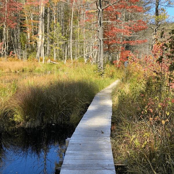 The Quincy Bog Rumney NH Trail