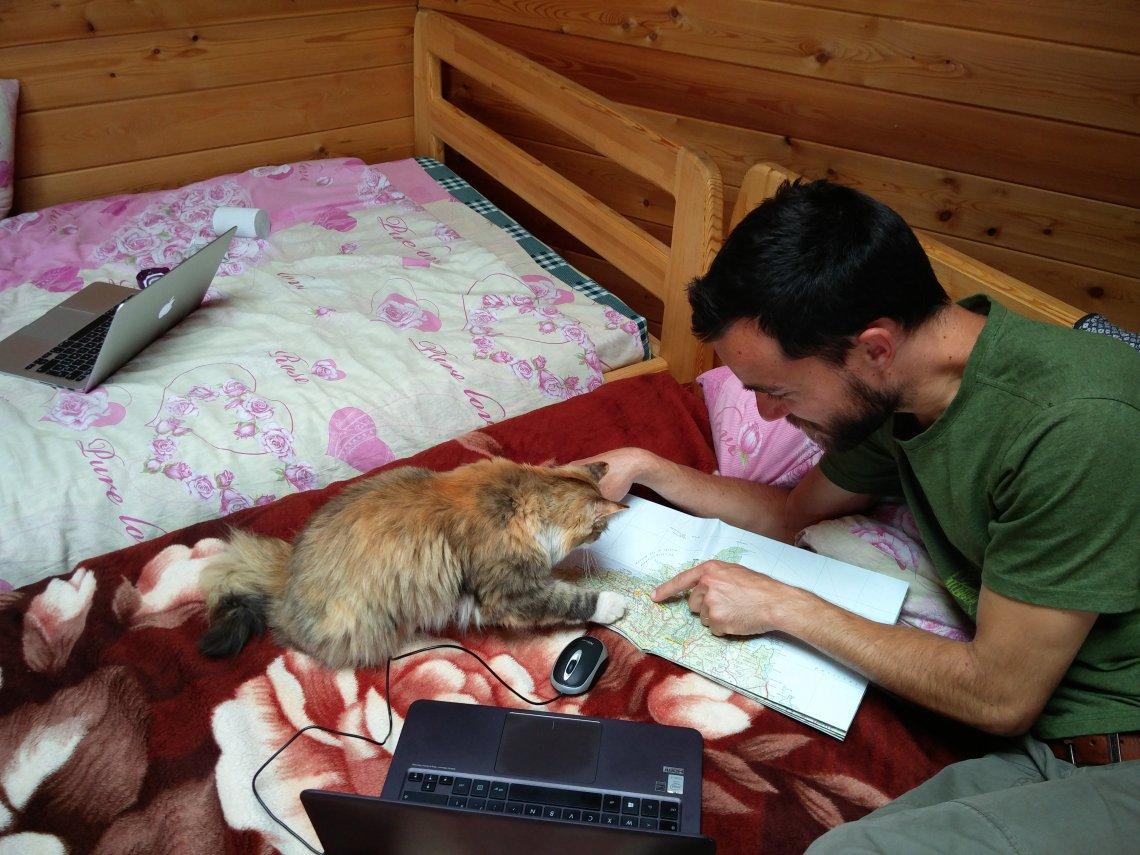 Un chat sur l'île d'olkhon en russie