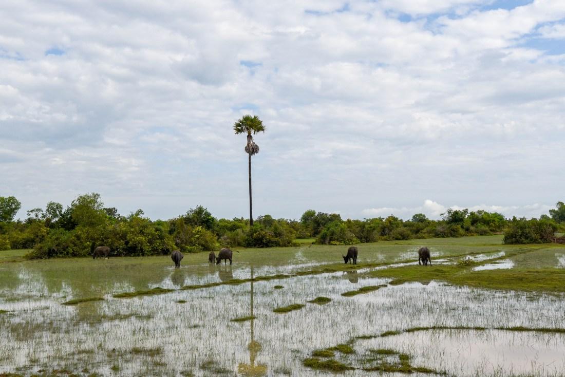 Paysage au Cambodge, sur la route de Siem Reap @neweyes