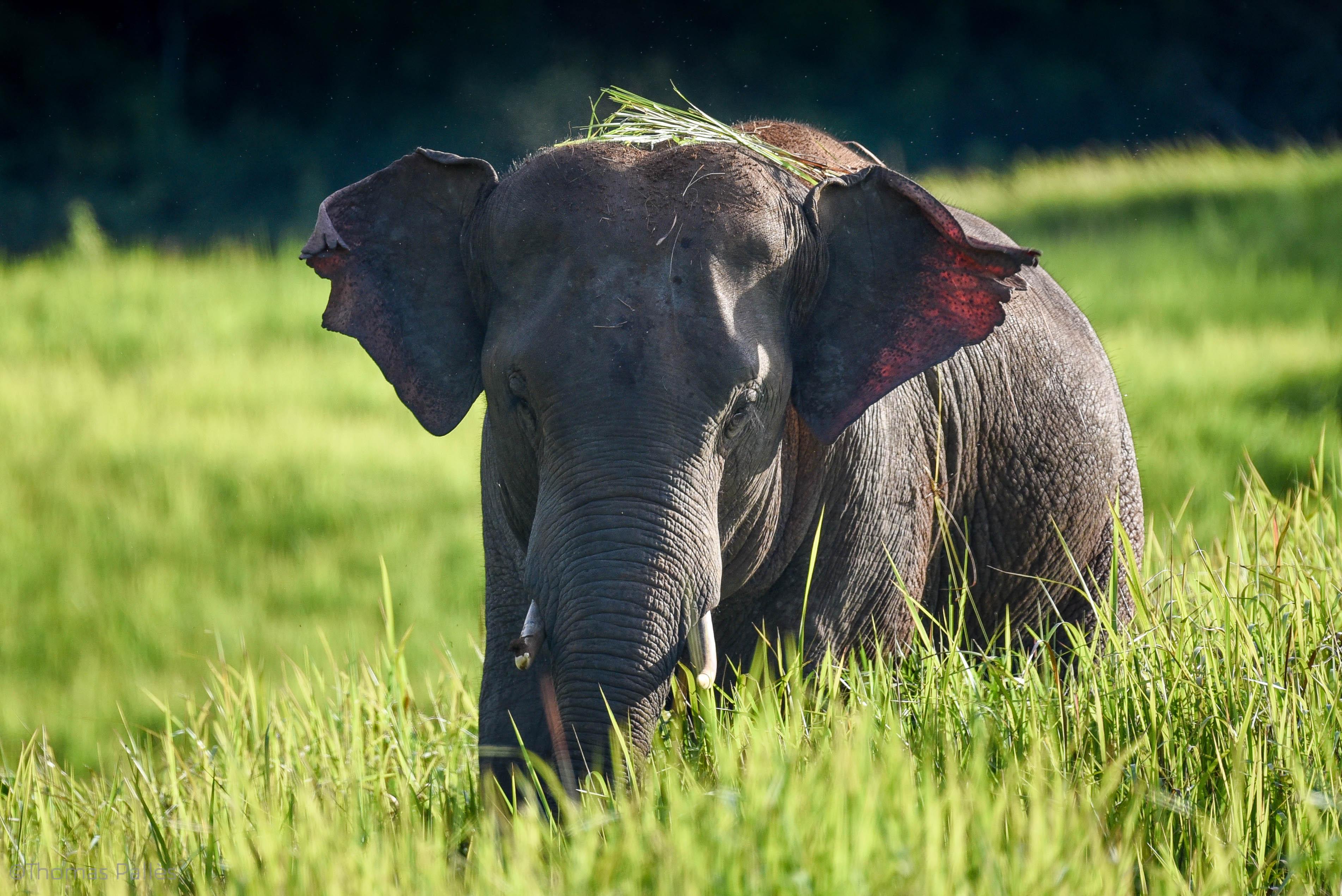 Rendez-vous avec les animaux du parc de Khao Yai, en Thaïlande