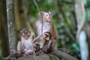 Adorables bébés macaques @neweyes