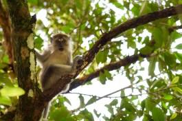 Découvrir les singes à Penang @neweyes
