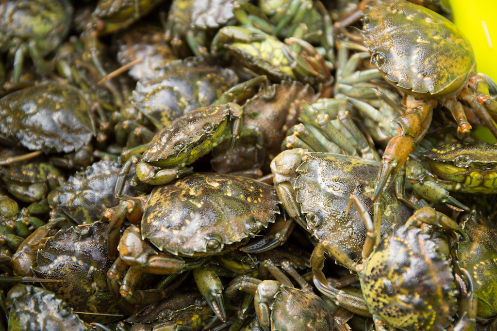 Inside The Push To Get Invasive Soft Shell Crab And Caviar