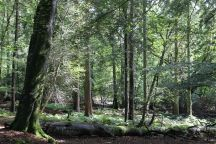 In medieval times a forest meant an area preserved for royal hunting, and not a wooded area as it does today.