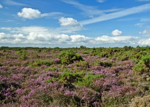 new forest lowland heath