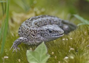 new forest reptiles
