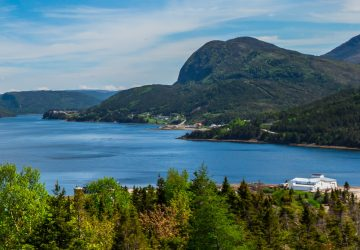 Newfoundland Nature Experiences: 4 Places to Get up Close and Personal