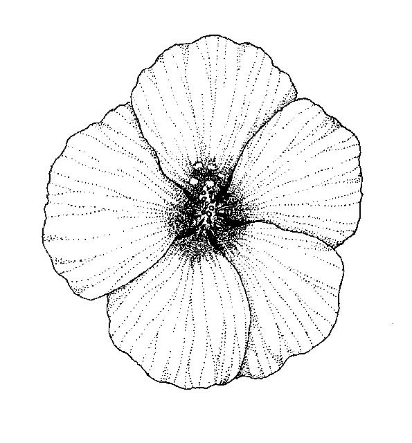 Malvaceae: Dichotomous Key: Go Botany