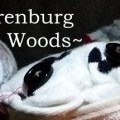 Garenburg Woods Download Free PC Game Direct Play Link