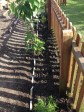 the new herb border edged with marble slate!!!