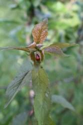 Ladybird Love In