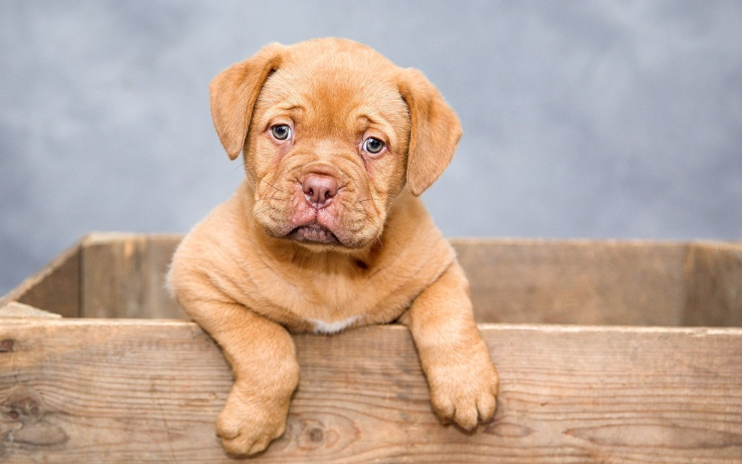 Your Dog Had An Accident On The Carpet. Now What?