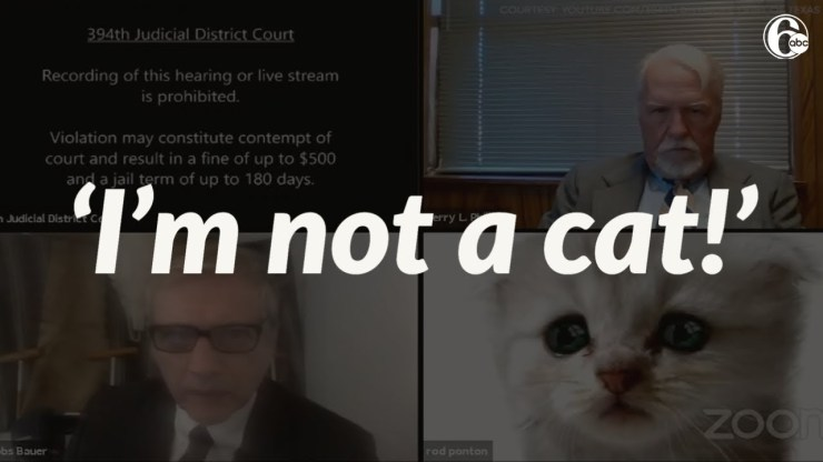 Cat Zoom Lawyer Filter