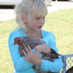 Chicken at the petting zoo