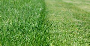 cut-grass-landscape