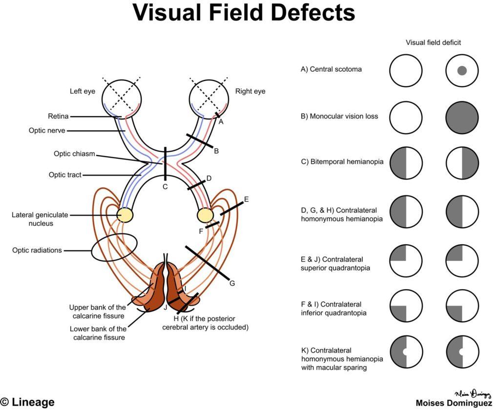 Anatomy Quadrants Worksheet
