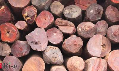Centre eases export ban norms for Odisha to ship 810 tonnes of red sanders wood in log form