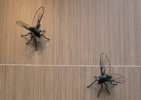 New Zealand Sandflies