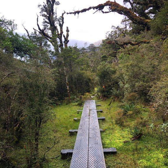 Dusky Track walkway