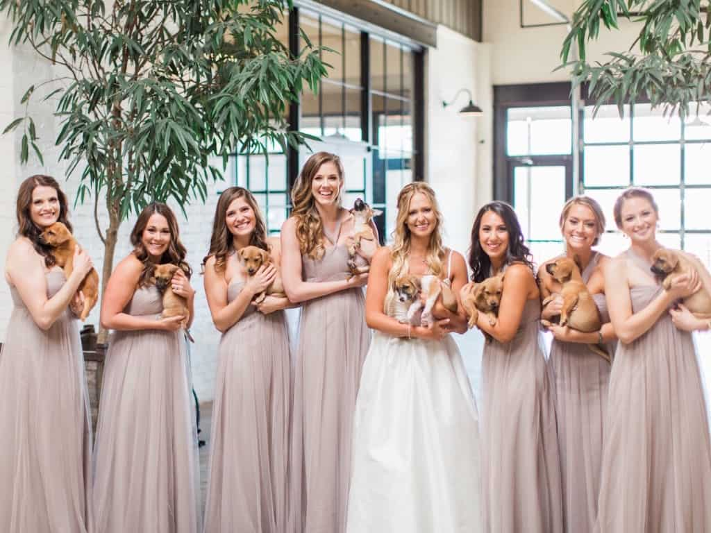 Groom Surprises Bride With Puppies On Wedding Day