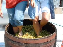 Stomping Wine Grapes