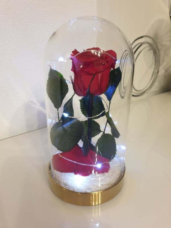 rose rouge éternelle