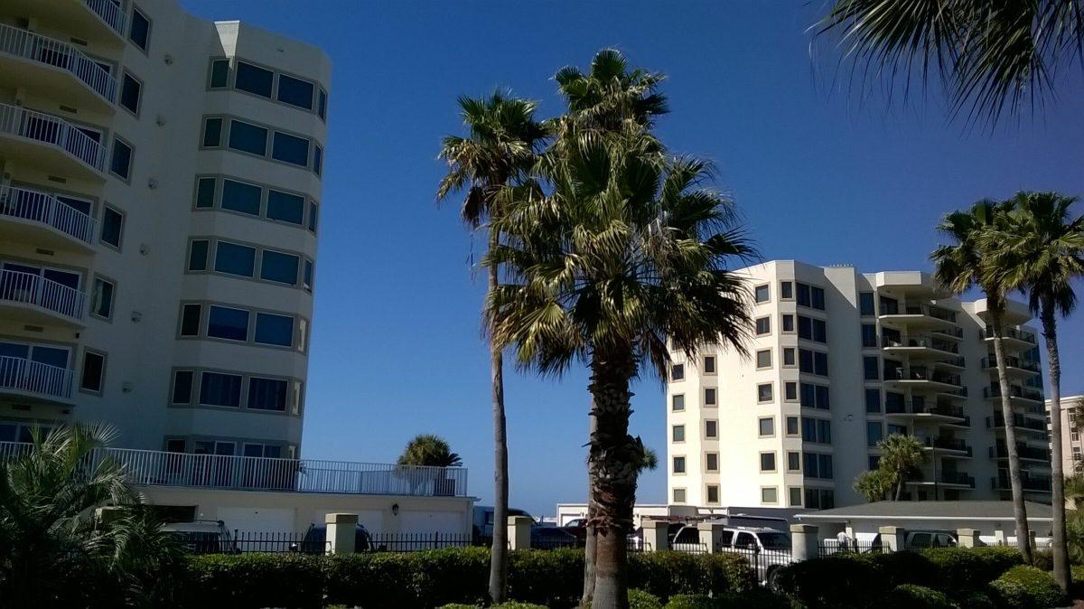 Gulf Shore Dr, Destin, Florida - Washingtonia Palm 05