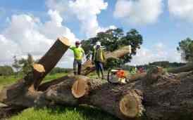 New Leaf Arboriculture - Arborist & Tree Service - Tree Removal