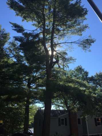 New Leaf Arboriculture - Arborist & Tree Service - Tree Trimming