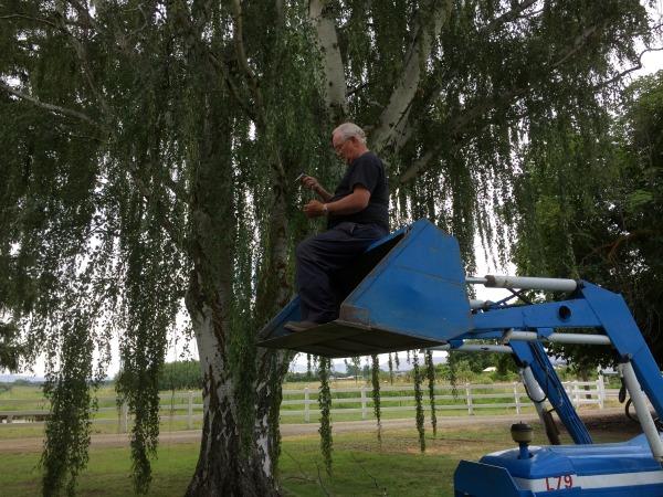 tree trims