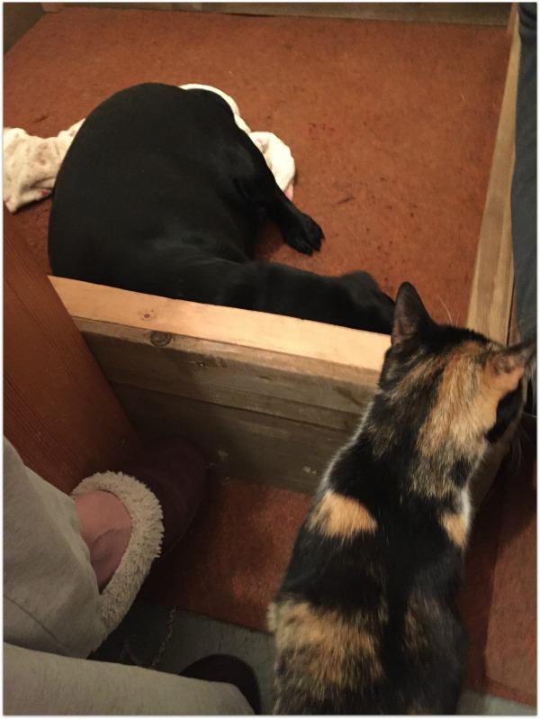 puppies cat